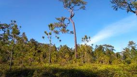 Национальный парк Phukradueng стоковые изображения