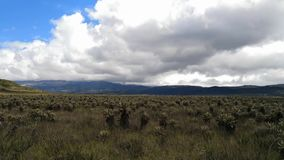 Национальный парк Purace в Колумбии Экосистема Paramo Frailejon, заводы Espeletia акции видеоматериалы