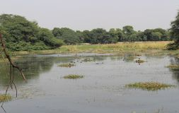 Национальный парк Sultanpur Стоковые Изображения