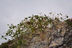 Национальный парк Vallarta сводов под водой или парк Las Peñas Лос Arcos морской или утесы, с большим разнообразием includi морс Стоковые Фото