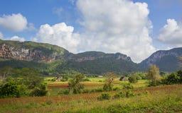 Национальный парк Vinales, ЮНЕСКО, провинция Pinar del Rio, Куба стоковые фотографии rf