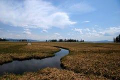 национальный парк yellowstone Стоковые Изображения