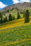 национальный парк yellowstone стоковое изображение rf