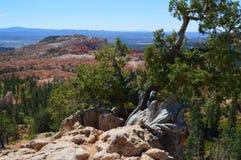 Национальныйо парк каньона Bryce Стоковые Фото