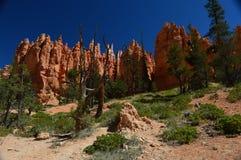 Национальныйо парк каньона Bryce Стоковые Изображения RF