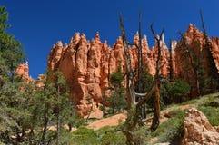 Национальныйо парк каньона Bryce Стоковое фото RF