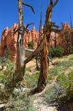 Национальныйо парк каньона Bryce Стоковые Фотографии RF