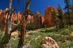 Национальныйо парк каньона Bryce Стоковое Изображение