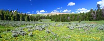 Национальный лес Bighorn панорамный стоковые фотографии rf