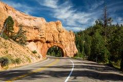 Национальный лес Dixie стоковое фото