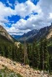Национальный лес Okanogan Стоковая Фотография