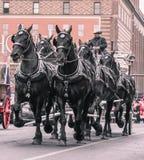 Национальный западный парад выставки запаса Стоковая Фотография