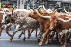 Национальный западный парад выставки запаса Стоковое Изображение RF