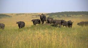 Национальный заповедник Mara Masai в Кении Стоковое Изображение RF