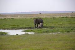 Национальный заповедник Mara Masai в Кении Стоковое Фото