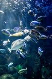 Национальный музей морской биологии и аквариума стоковое изображение