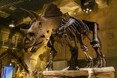 Национальный музей природы и науки в токио, Японии Стоковое Изображение RF