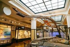 Национальный музей природы и науки в токио, Японии Стоковая Фотография