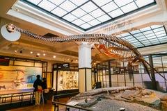 Национальный музей природы и науки Стоковое фото RF
