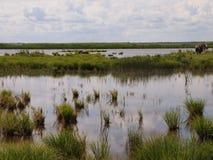 Национальный парк Ķemeri (Латвия) Стоковые Изображения RF