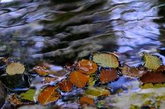 Национальный парк Абруццо Лацио Молизе стоковая фотография