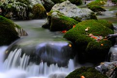 Национальный парк Абруццо Лацио Молизе стоковая фотография rf