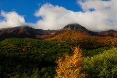 Национальный парк Абруццо Лацио Молизе стоковые изображения
