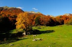 Национальный парк Абруццо Лацио Молизе стоковое фото rf