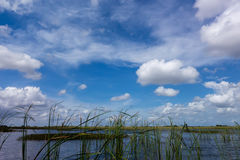 Национальный парк болотистых низменностей в Флориде Стоковые Фото