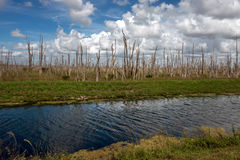 Национальный парк болотистых низменностей в Флориде Стоковые Изображения