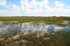 Национальный парк болотистых низменностей Стоковые Изображения RF
