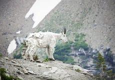 национальный парк горы козочки ледника стоковая фотография rf