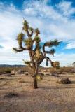 Национальный парк дерева Иешуа, Калифорния Стоковое фото RF