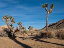 Национальный парк дерева Иешуа Стоковое Фото