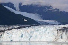 Национальный парк ледника - Аляска Стоковая Фотография