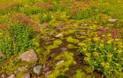 Национальный парк ледника земной крышки Стоковые Фотографии RF