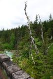Национальный парк ледника - Монтана Стоковое Фото