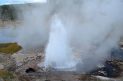 Национальный парк Йеллоустона вулкана Стоковые Изображения