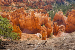 Национальный парк каньона Bryce в Юте, США Стоковая Фотография