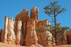Национальный парк каньона Bryce, Юта, Соединенные Штаты Стоковое Фото
