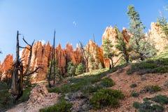 Национальный парк каньона Bryce, Юта, США Стоковая Фотография