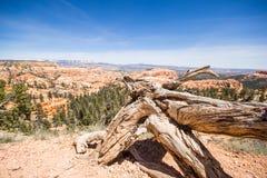 Национальный парк каньона Bryce Стоковое Изображение RF
