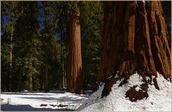 Национальный парк Калифорния секвойи, США Стоковое фото RF