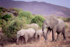 национальный парк Кении семьи слонов amboseli Стоковые Фотографии RF