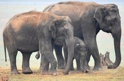 национальный парк Кении семьи слонов amboseli Стоковое фото RF