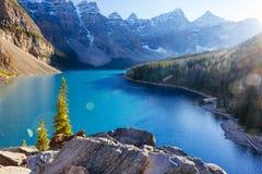 Национальный парк озера морен, Lake Louise, Banff, Альберта, Канада Стоковое Изображение RF