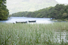 Национальный парк озера Leane залива, Killarney Стоковое фото RF