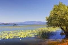 Национальный парк озера Skadar, Черногория Стоковое Фото