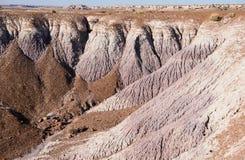 Национальный парк окаменелой пущи Стоковая Фотография RF