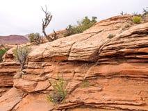 Национальный парк природы, Юта Ландшафт и утесы Дороги и p Стоковая Фотография